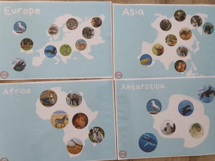 Zapowiedź: Pakiet zwierzęta i ich kontynenty (realne!)