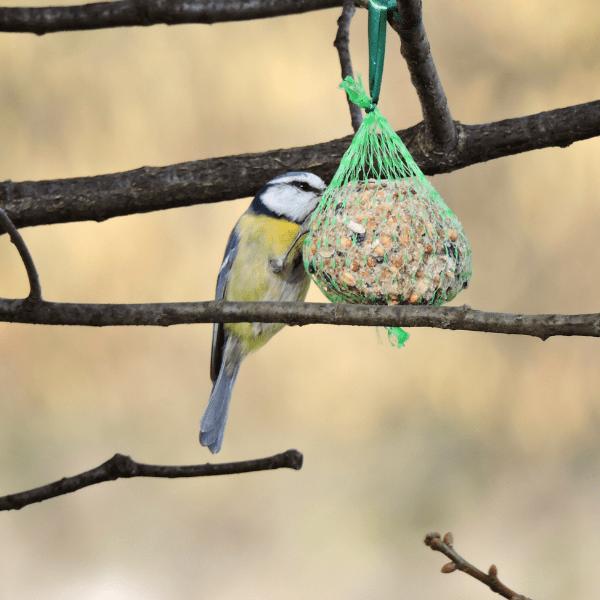 Pomysł na zajęcia…ptaki odlatujące na zimę!